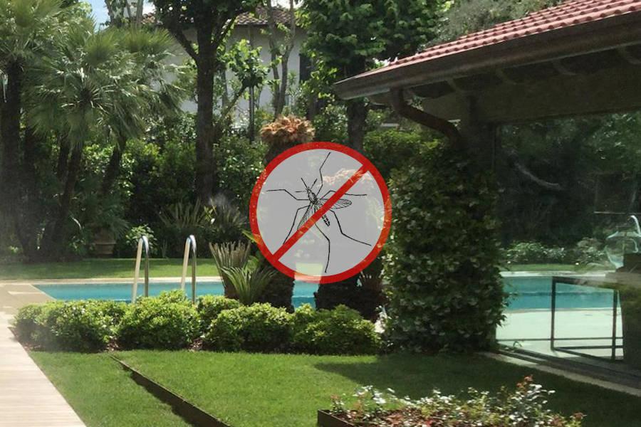 Eliminare le zanzare, disinfestazione, giardino, piscina